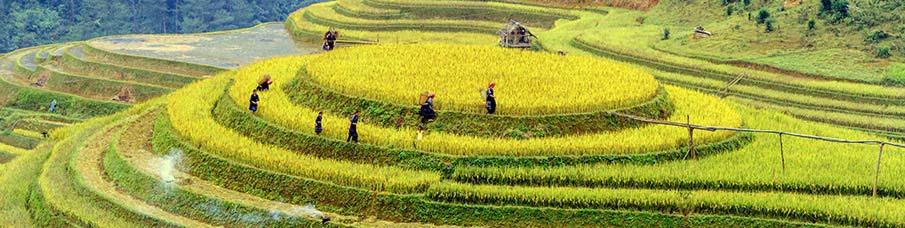 north-vietnam-rice