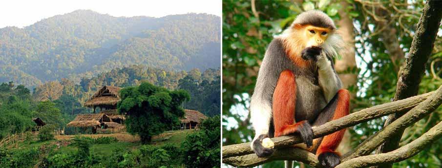 Trekking in Vietnam - Pu Mat reserve