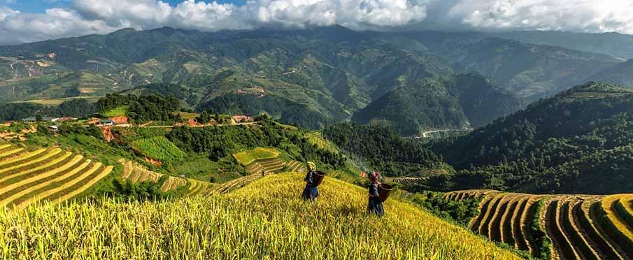 vietnam-yen-bai-rice-terrace