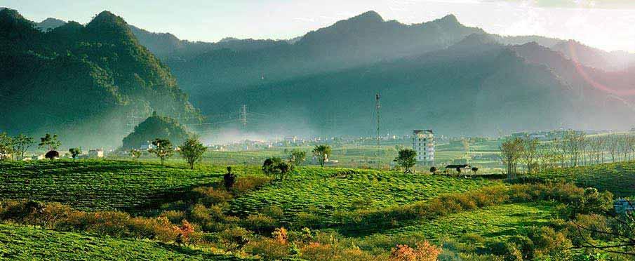 moc-chau-vietnam-tea-plantation