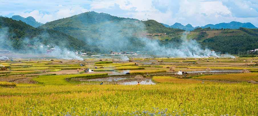 dien-bien-phu-vietnam-rice