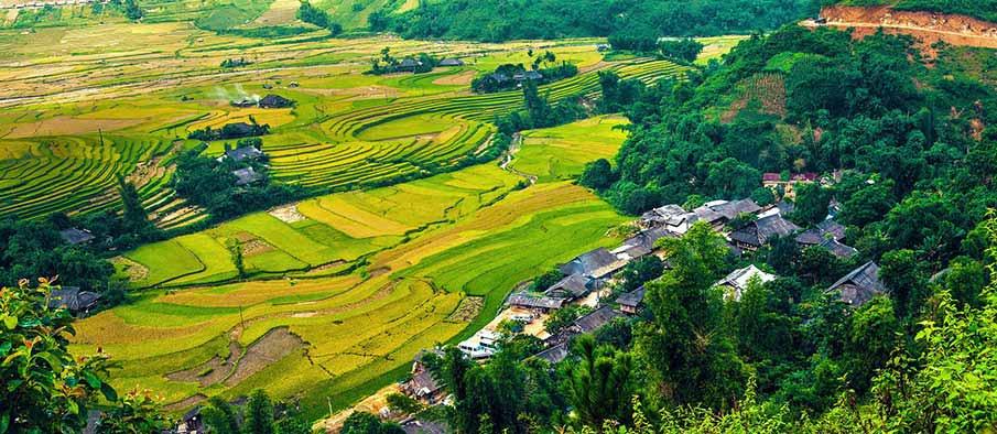 yen-bai-rice-terraces-vietnam