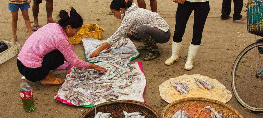 thanh-hoa-vietnam-fishes
