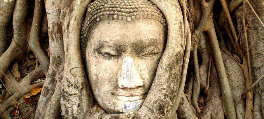 ayutthaya-head-tree-bangkok-thailand