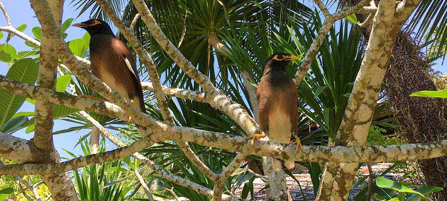 koh-chang-island-birds-thailand