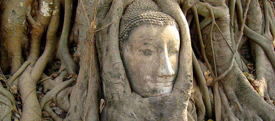 thailand-head-tree-ayutthaya