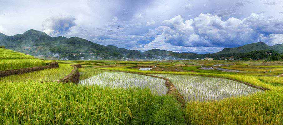 dien-bien-phu-rice-fields-vietnam