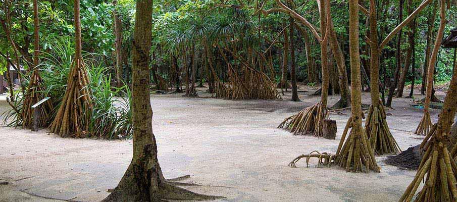 koh-phi-phi-island-thailand3