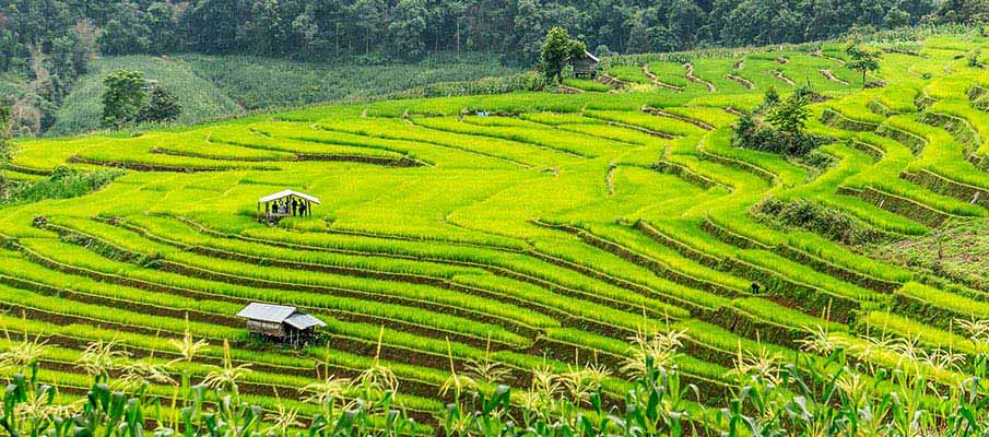 chiang-mai-rice-terace-thailand