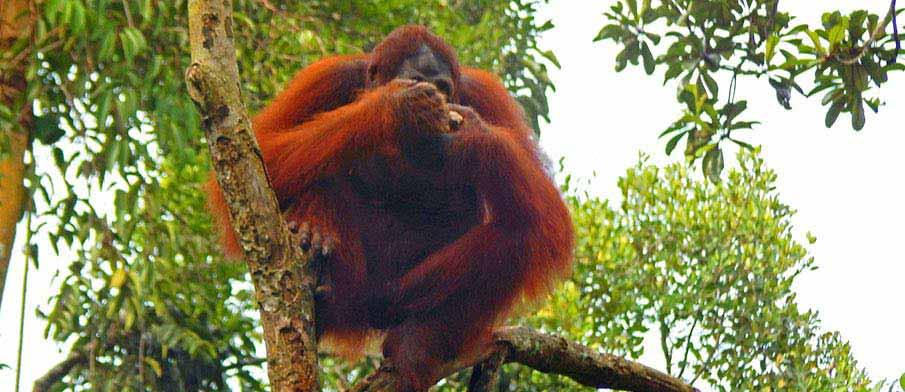 Semenggoh-Nature-Reserve-malaysia