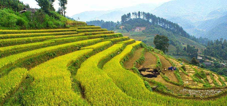 north-vietnam-mu-cang-chai