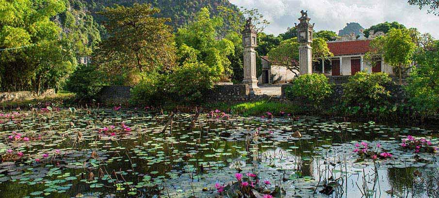tam-coc-ninh-binh-lotus-vietnam