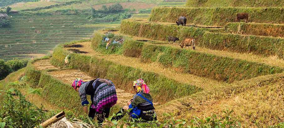 mu-cang-chai-vietnam-hmong