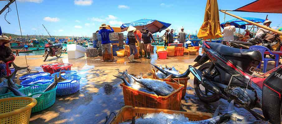 phu-quoc-island-fish-market