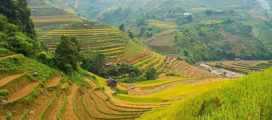 mu-cang-chai-rice-terrace2-vietnam