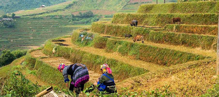 mu-cang-chai-rice-terrace3-vietnam