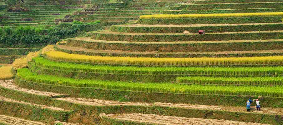 mu-cang-chai-rice-terrace6-vietnam