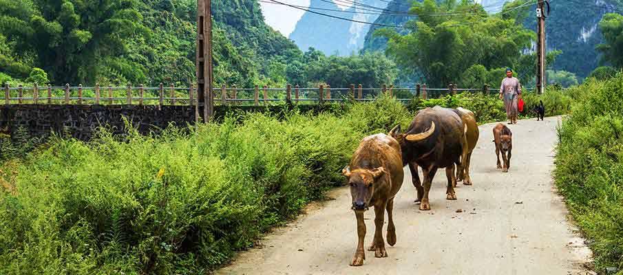 road-danger-vietnam