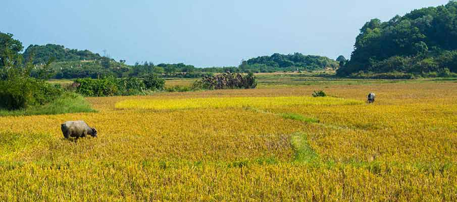 mong-rong-co-to-island-vietnam