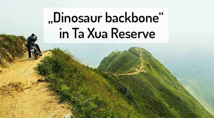 dinosaur-spine-ta-xua-reserve-vietnam
