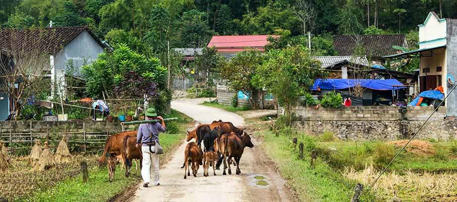 phong-nam-cao-bang-village