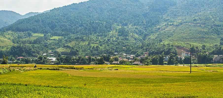 tu-le-town-rice-field-vietnam