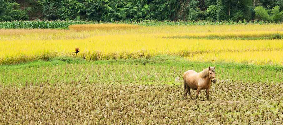 xuan-truong-bao-lac-vietnam2