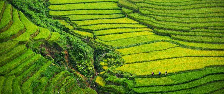 sapa-rice-terraces-muong-hoa
