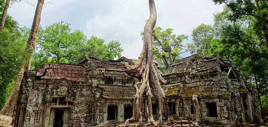angkor-wat-tree-siem-reap