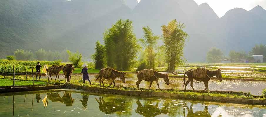 cao-bang-horses-vietnam