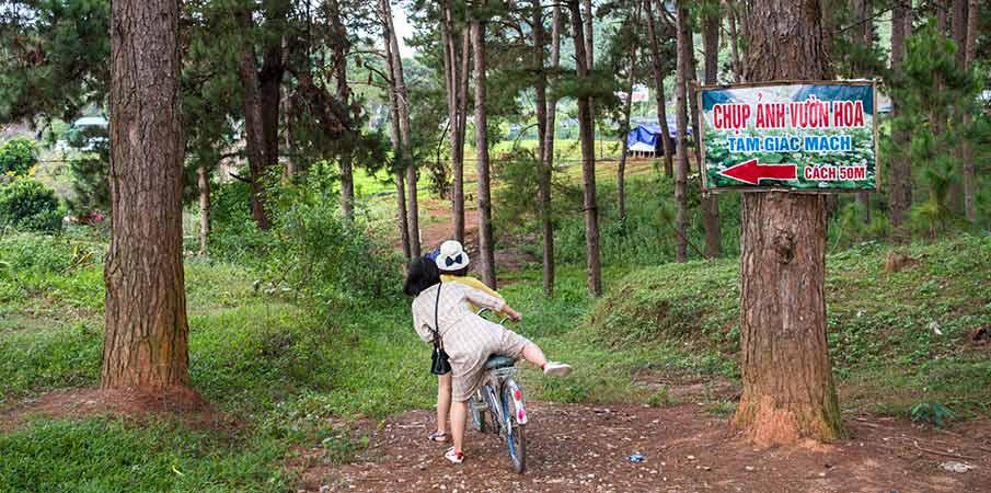 ban-ang-pine-forest-moc-chau