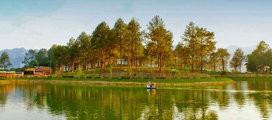 ban-ang-pine-forest-moc-chau2