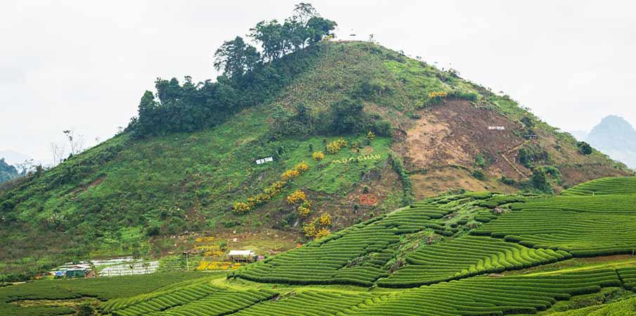 moc-chau-trai-tim-tea-hill