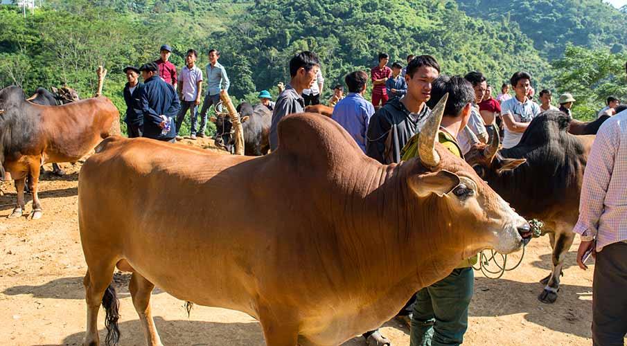 bao-lam-market-vietnam-cao-bang