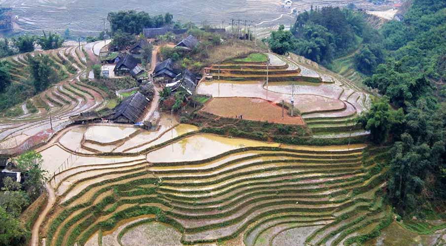 muong-hoa-valley-rice-terraces-sapa