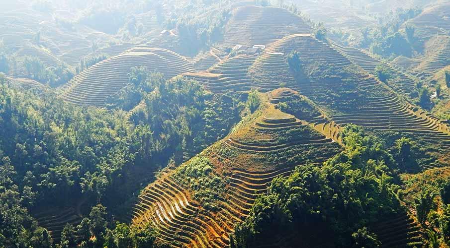 muong-hoa-valley-sapa-rice-terraces