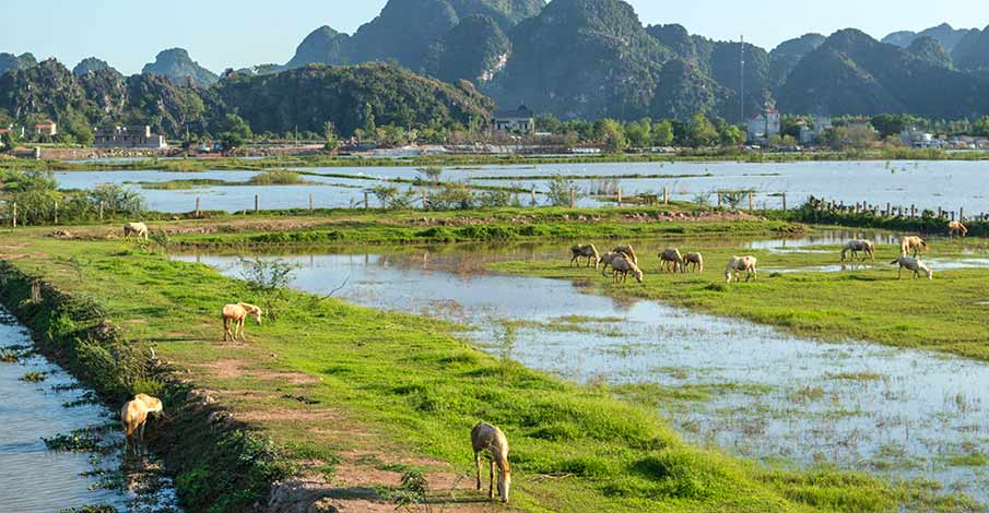 ninh-binh-to-van-long-travel-vietnam