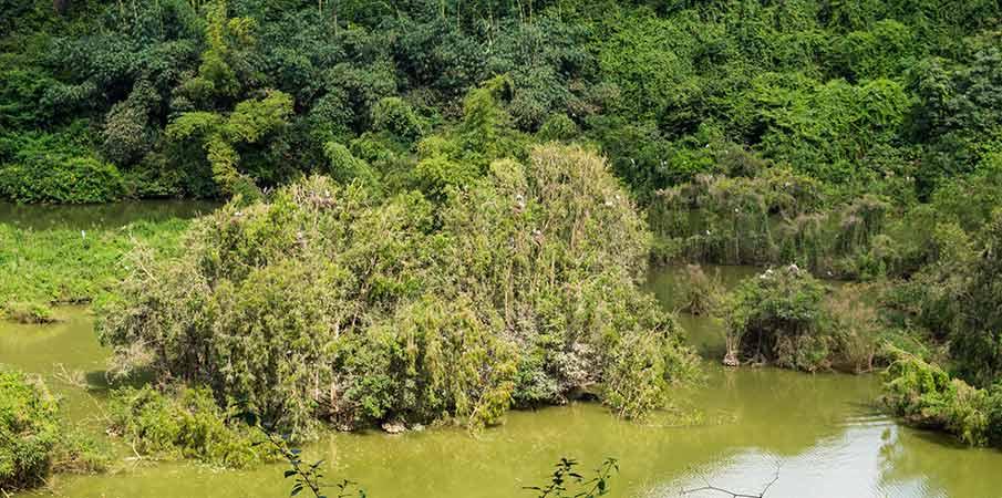 thung-nham-park-birds-vietnam